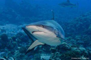 requin1304