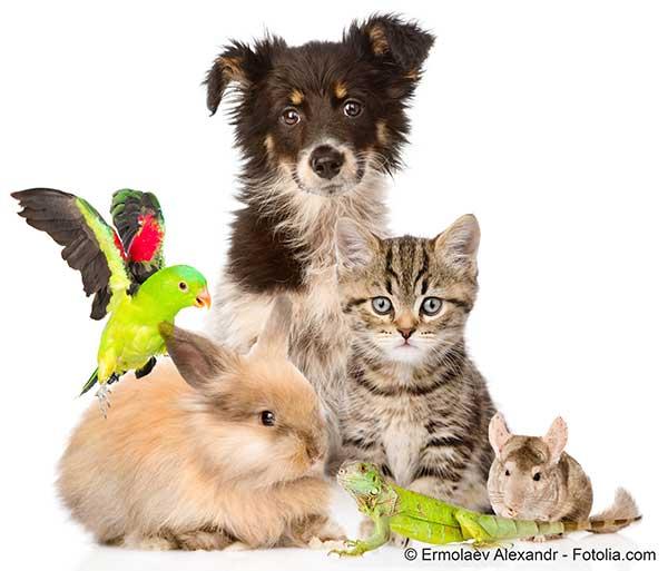 Vous tes plut t chat chien autre ou rien notre for Repulsif chien et chat exterieur