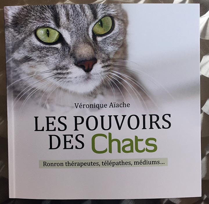 chats01