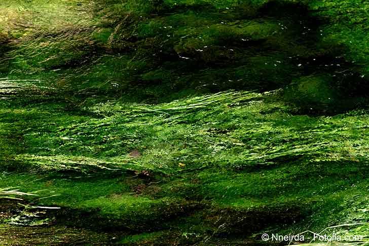 Photo of L'État se fait condamner par ses propres tribunaux dans une affaire d'algues vertes