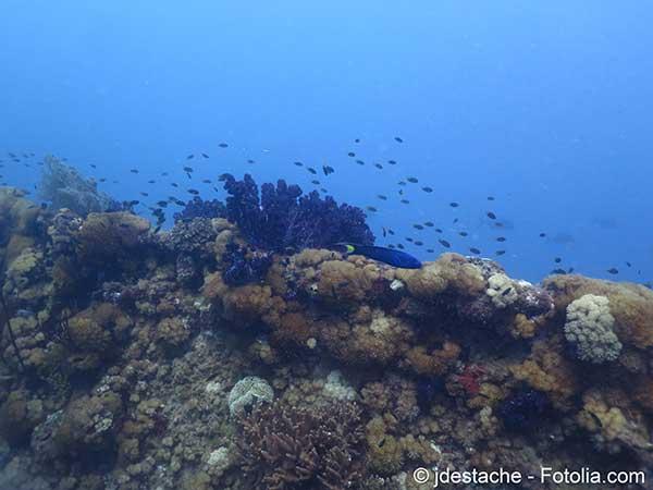 Photo of En Australie les coraux de la Grande Barrière ont mal résisté à la dernière vague de chaleur
