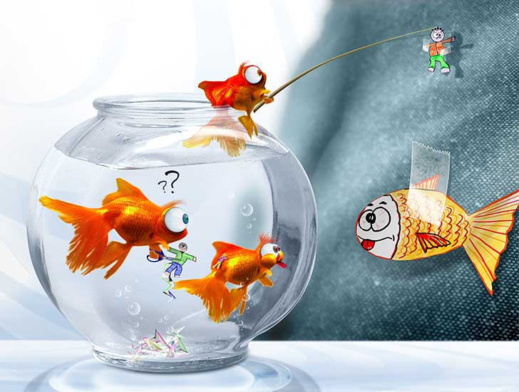 Photo of Poisson… impossible !