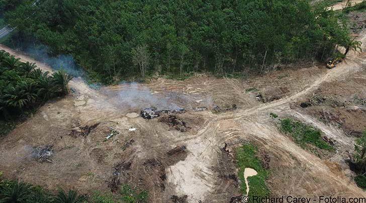 Photo of La RDC est derrière le Brésil le second pays responsable de la déforestation mondiale